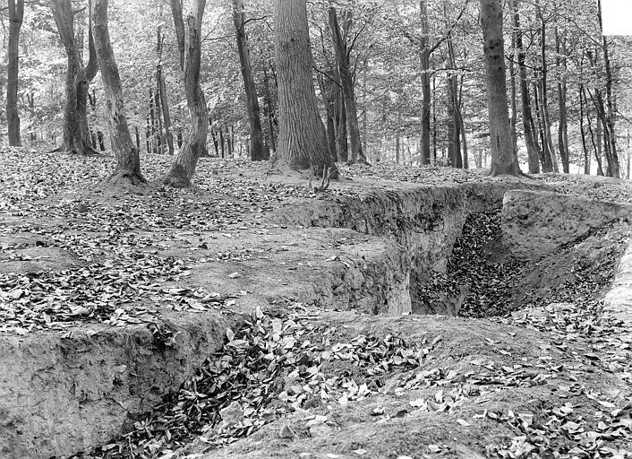 Domaine national, château Parc : sol forestier, Durand, Jean-Eugène (photographe),