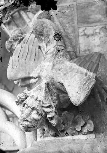 Cathédrale Notre-Dame Gargouille, Mieusement, Médéric (photographe),