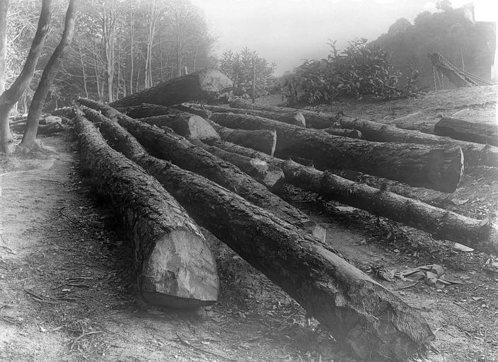Domaine national, château Parc : arbres coupés, Durand, Jean-Eugène (photographe),